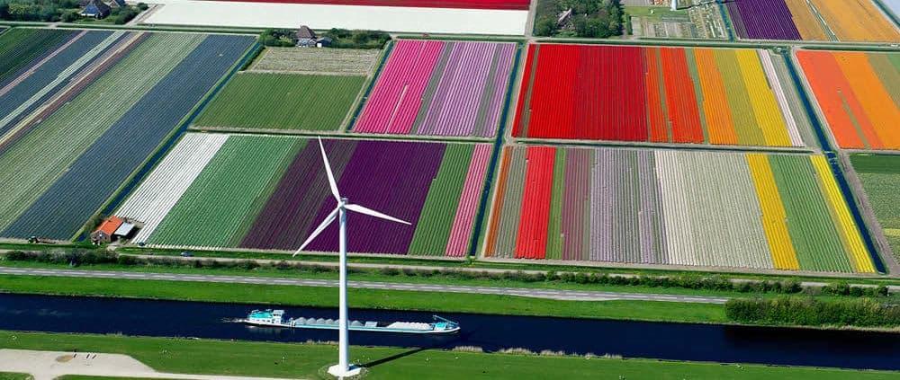 luchtfoto bollenvelden
